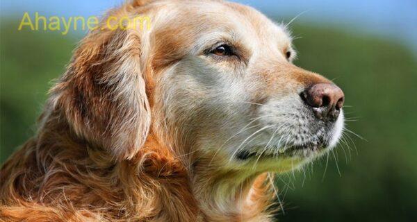 tiêm phòng là giải pháp phòng bệnh care ở chó tốt nhất