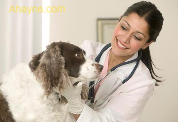 phòng tránh bệnh nấm da trên chó