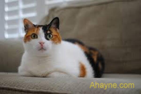 cho mèo ăn đủ bữa, đúng lịch