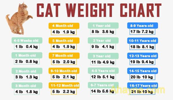 bảng cân nặng chuẩn của mèo theo tuổi