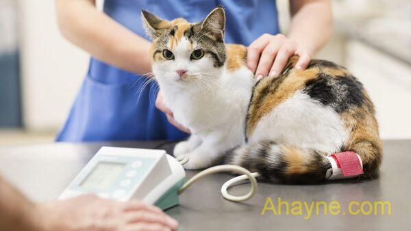 kiểm tra cân nặng của mèo