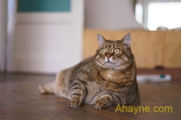 bé mèo mũm mĩm rất          dễ thương