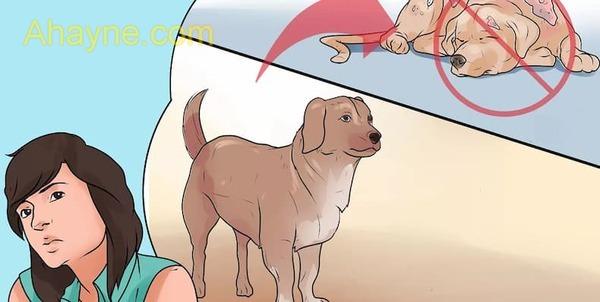 cách phòng ngừa chó bị ghẻ