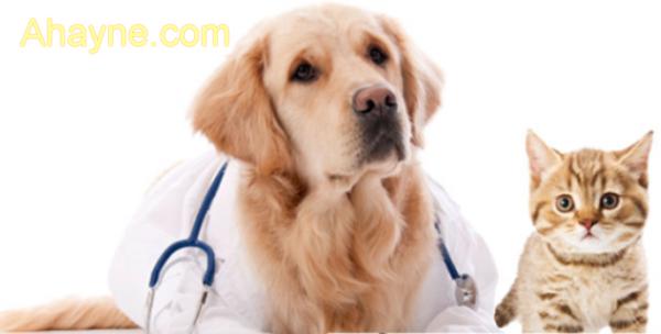 Điều trị chó bị ốm bỏ ăn mệt mỏi