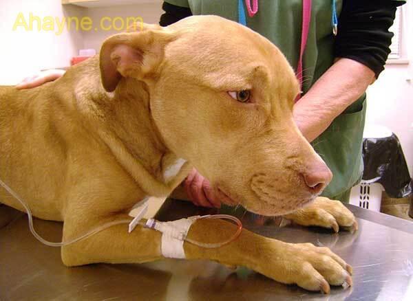 triệu chứngkhi chó bị tiêu chảy đi phân nước