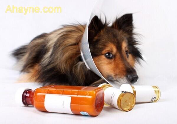 lưu ý khi điều trị chó mèo bị tiêu chảy bằng oresol