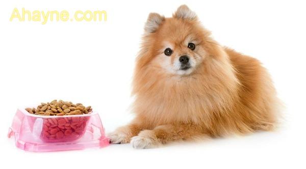 Áp dụng chế ăn phù hợp giúp chó phốc được          bình phục sớm hơn