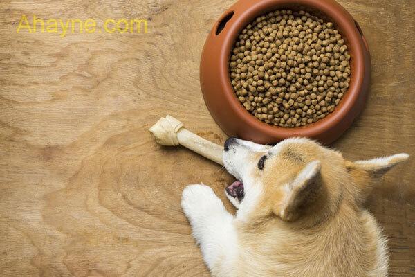 một vấn đề vô cùng quan trọng ảnh hưởng đến sức ăn của chó