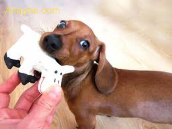 hãy          khám phá cách sử dụng đồ chơi cũng như cách tương tác với cún cưng