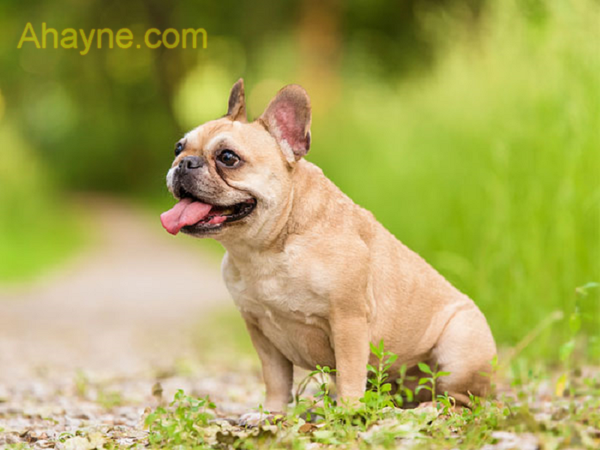 với trò chơi huấn luyện chó trốnsẽ kích thích khứu giác nhạy cảm của chúng