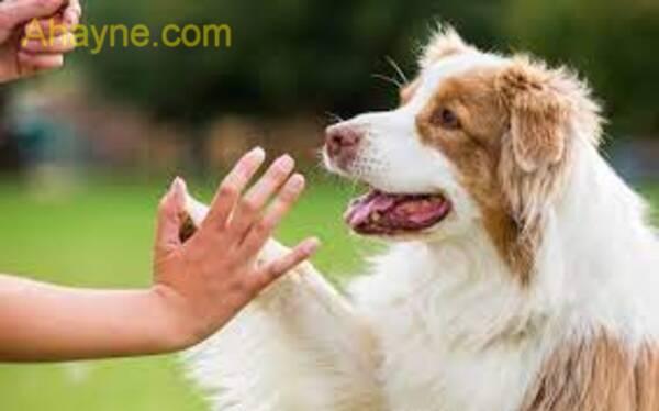 dạy chó vượt qua chướng hoảng hốt vật không hề khó