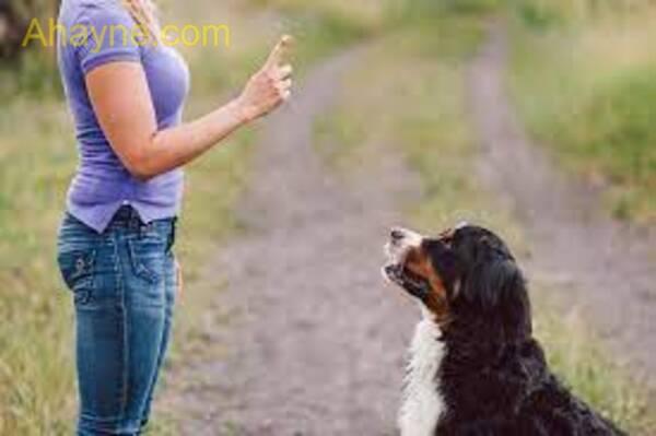 lưu ý khi huấn luyện chó vượt chướng kinh hoảng vật