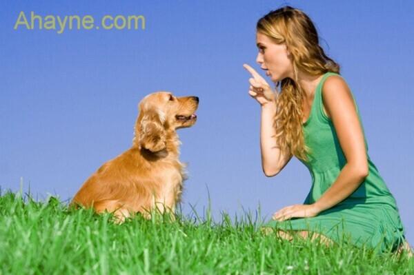 30 bài học huấn luyện chó tại nhà ai cũng làm được