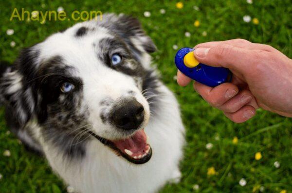 sau khi chú chó hiểu lệnh game thủ cần thực hành làm liên tục với nó
