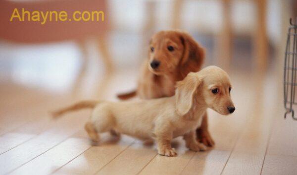 huấn luyện chó ở ngoan ngoãn trong chuồng