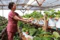 Tổng hợp kiến thức nông-lâm-ngư nghiệp cho mỗi gia đình
