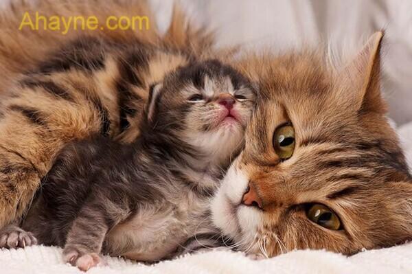 hãy để mèo con ở một mình cho đến khi chúng cai sữa