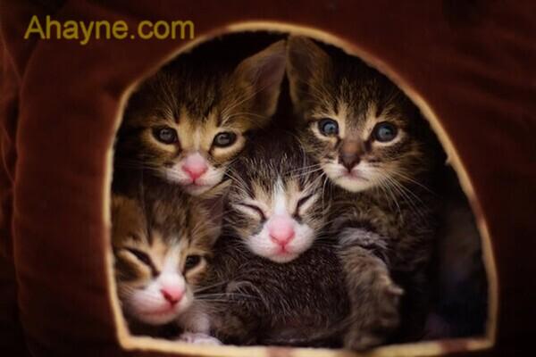 cách nuôi mèo con hoang mất mẹ