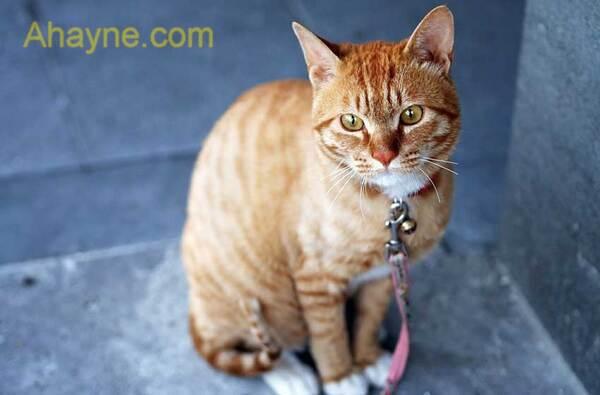 thông tin hữu dụng về chăm sóc mèo ta