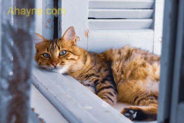 mèo ta rất thích tắm nắng
