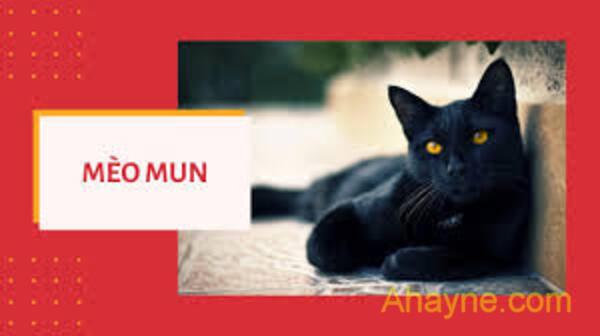 thời trung cổ, mèo đen được cho là tay sai của quỷ dữ