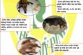 Bệnh Parvo ở chó- triệu chứng, cách phòng và chữa bệnh