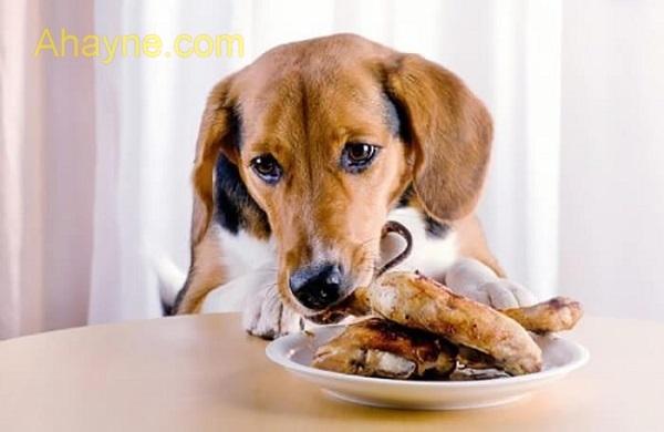 cách nhanh nhất dể chữa trị chó bị ho khạc