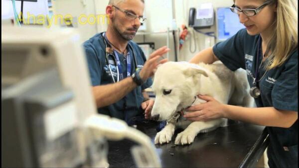hãy đưa cún đi gặp bác sĩ thú y nếu          người chơi thấy bất cứ triệu chứng gì của bệnh