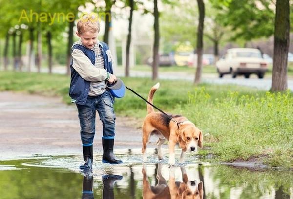 đối với những gia đình có trẻ nhỏ thì chỉ nên nuôi dưỡng giống chó hiền lành, thân thiết