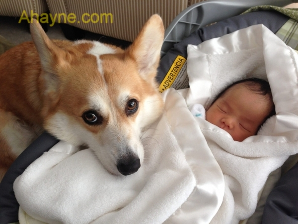 top 10 giống chó          thân mật nhất với gia đình và trẻ nhỏ