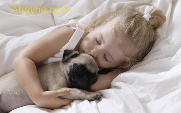 giống chó nào khi nuôi sẽ đảm bảo sự an toàn cho con trẻ