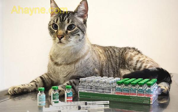 các loại vaccine cho mèo