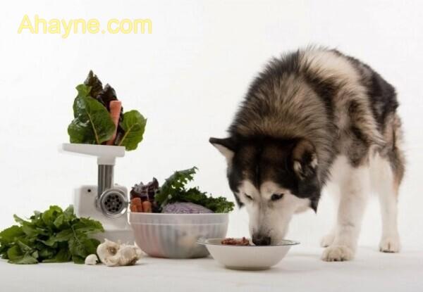những thực phẩm có hẹ, hành lá và tỏi có thể gây ra nước tiểu có máu, viêm dạ dày ruột