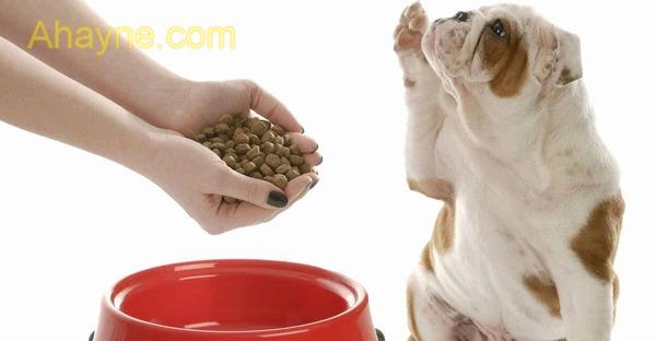 không phải cứ cún cưng ăn thịt là chú chó nhà bạn sẽ to khỏe