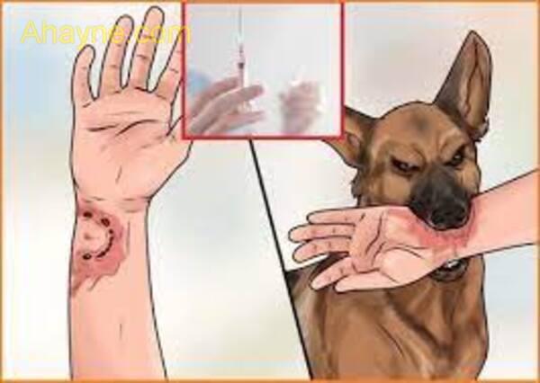 chỉ tiêm phòng dại cho chó mèo 1 mũi vacxin liệu có đủ?
