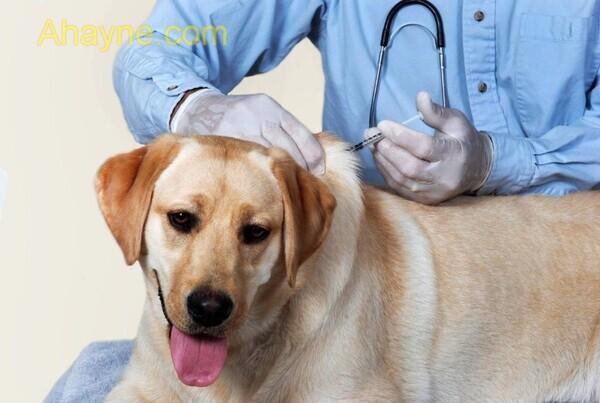 ngoài việc tiêm phòng dại cho chó theo định kì          người chơi cần lưu ý những vấn đề sau