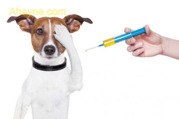 vacxin phòng ngừa được 5-7 bệnh cho chó