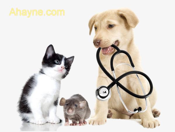 việc tiêm phòng cho chó chó thật sự rất quan trọng và          quan trọng