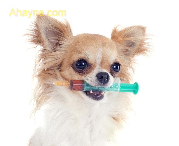 tại sao lại cần tiêm phòng vacxin cho chó?